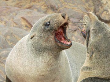 Zeeleeuwen - Blog - Merlijn Groep
