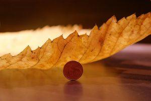 elm-leaf-231857_1920