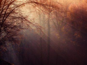 OR en mediation - Blog - Merlijn Groep