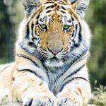 Blog Merlijn Groep Papieren tijgers